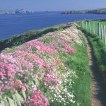 A Coastal Walk That's Good for Your Health