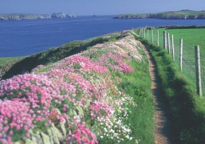 Pembrokeshire Coast Path in Spring