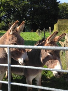 Once the donkeys were re-homed the sale went through